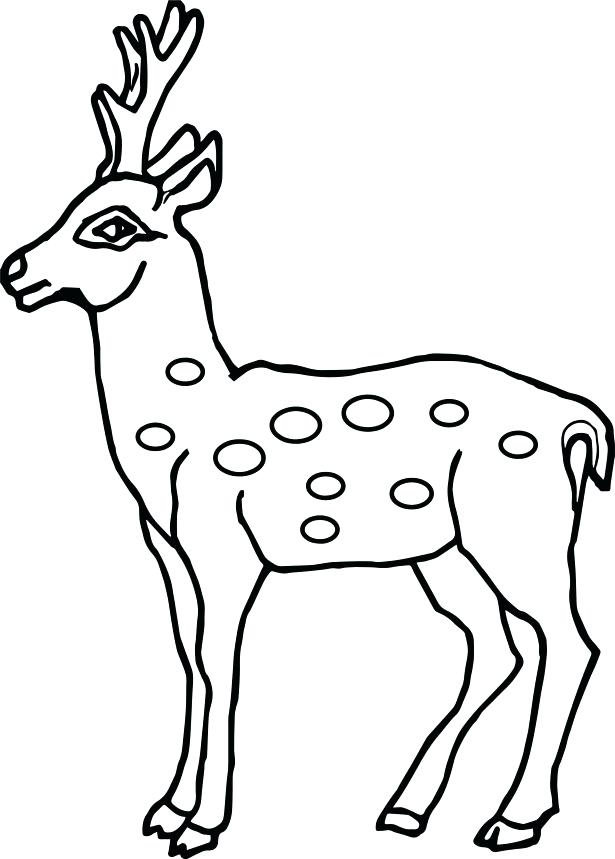 615x859 Coloring Pages Of Deer Coloring Pages Animals All Is Coloring Page