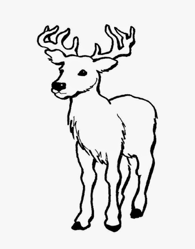 627x800 Coloring Pictures Of Deer Free Coloring Pictures