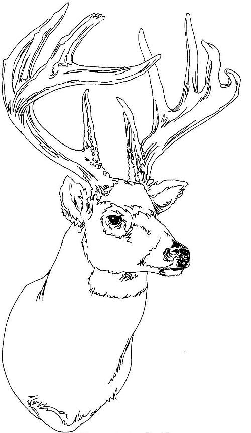 500x860 Deer Head Coloring Pages Deer Coloring Pages Deer Head