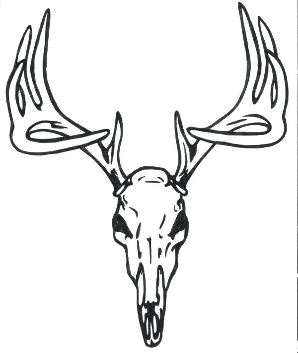 600x711 Deer Head Coloring Pages Deer Coloring Pages Deer Head Deer Face