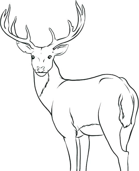 489x600 Deer Hunting Coloring Pages Deer Hunting Coloring Pages Deer