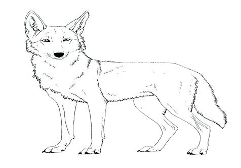 476x333 Gonoodle Coloring Pages Deer Coloring Pages Coyote Sheet Face