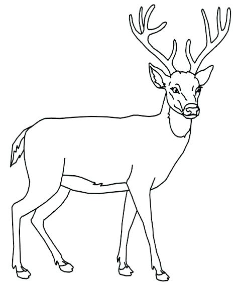 474x568 Coloring Pages Of Deer Free Printable Deer Coloring Pages Free