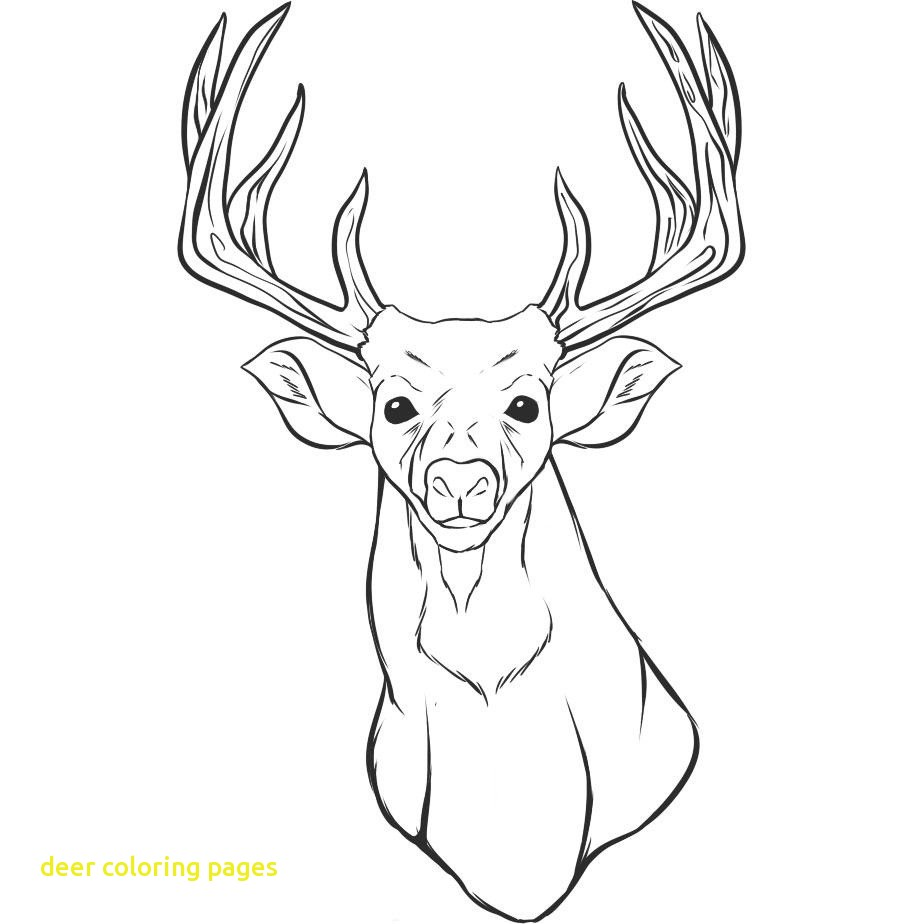 924x924 White Tail Deer Coloring Page Free Printable Pages Throughout