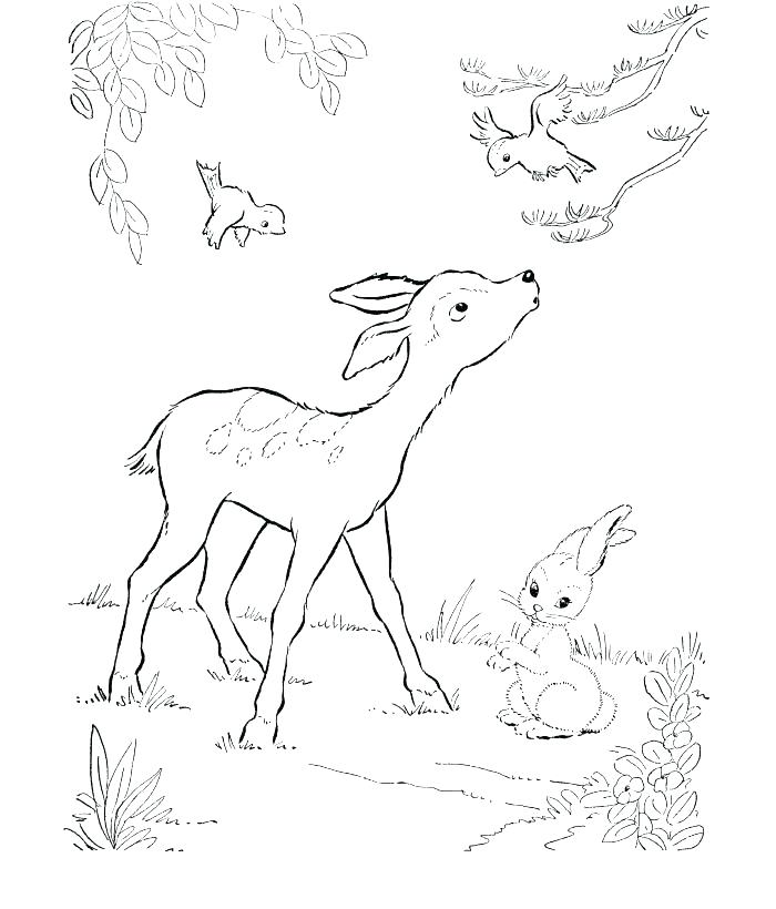 700x820 White Tailed Deer Coloring Page Deer Coloring Page Deer Coloring