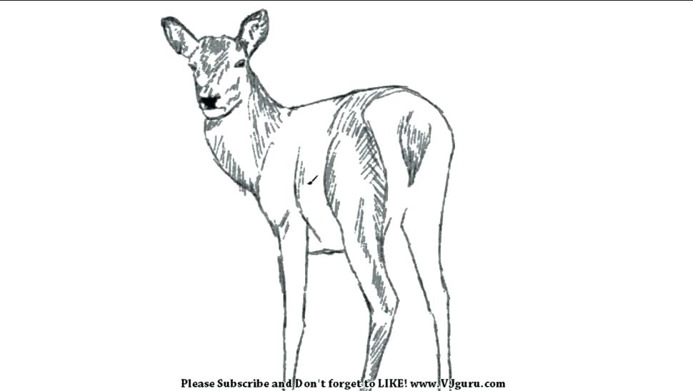 970x548 Coloring Pictures Deer Head Pages Printable Kids Colouring Picture