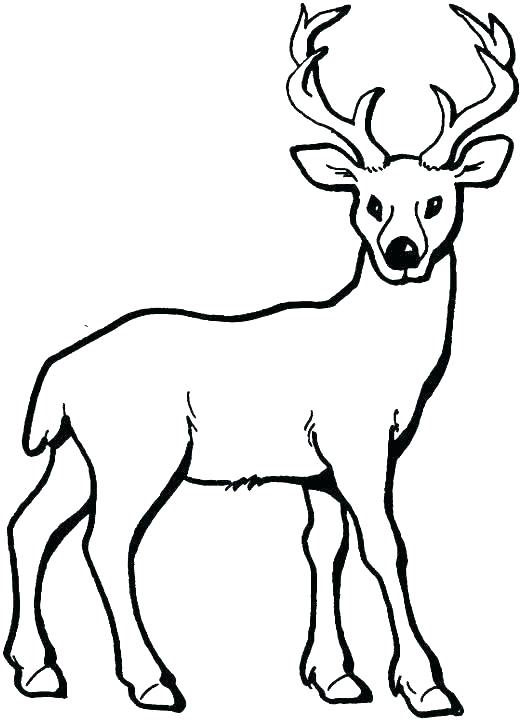 521x720 Deer Coloring Pages Face Coloring Pages