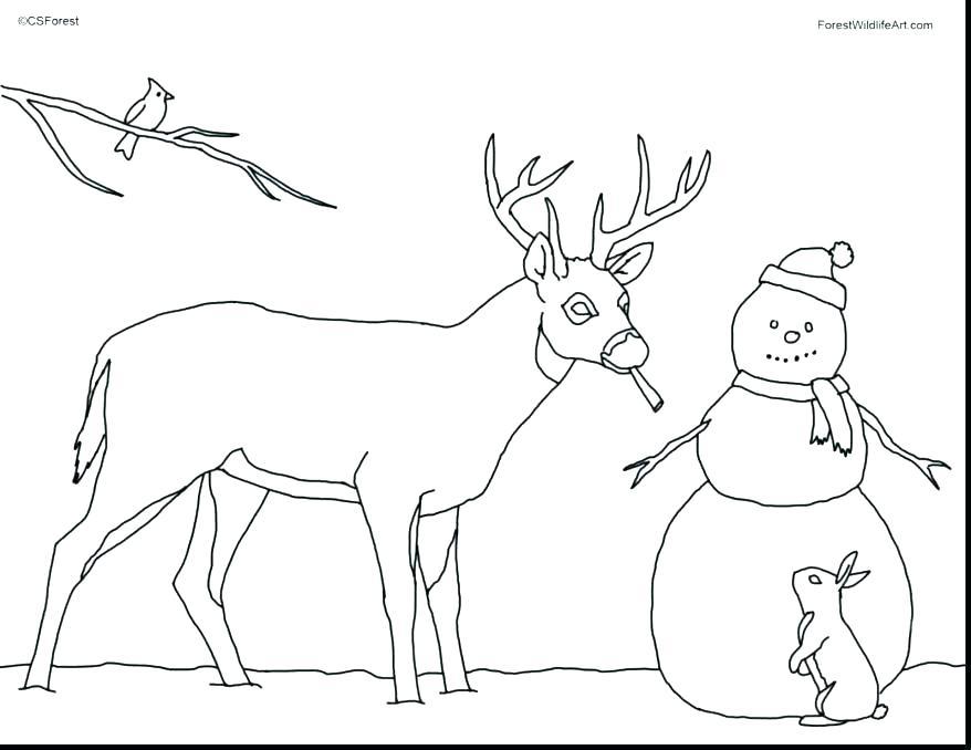 878x678 Deer Coloring Pages Deer Coloring Page Whitetail Deer Coloring