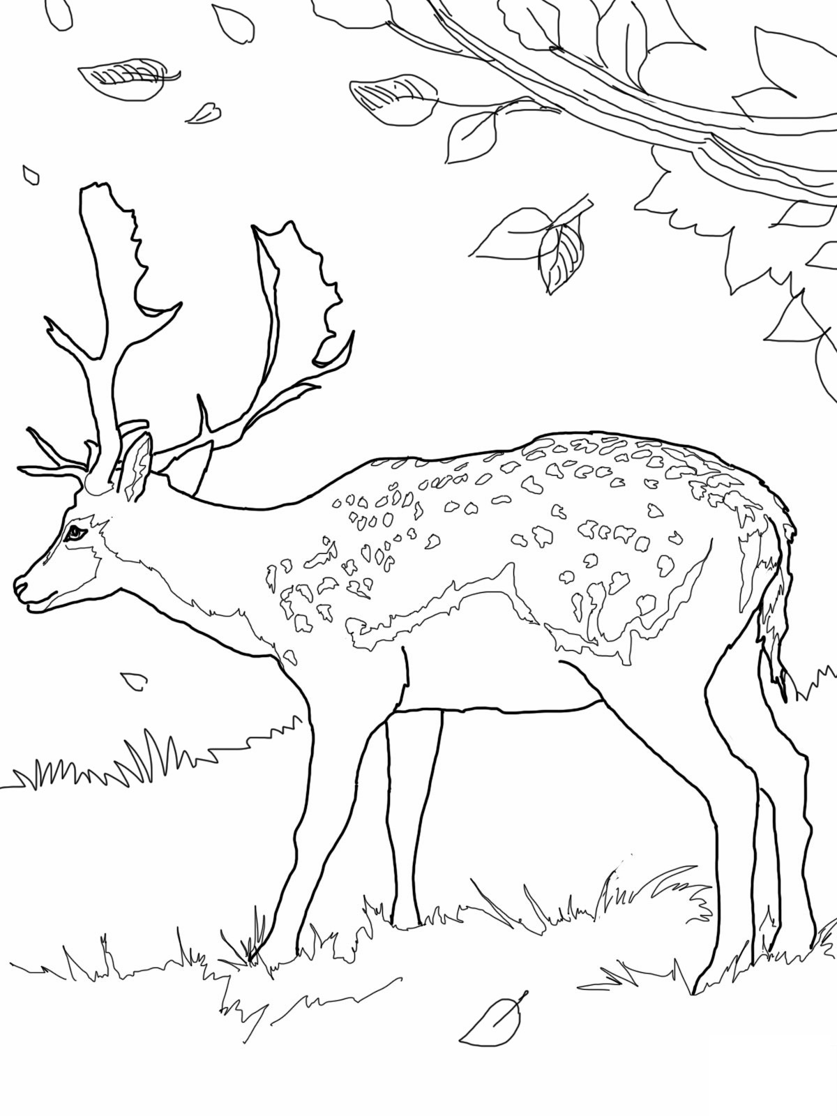 1200x1600 Deer Head Coloring Page Image Clipart Images