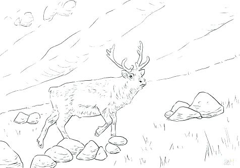 476x333 Deer Head Coloring Pages Deer Coloring Page For Kids Deer Head