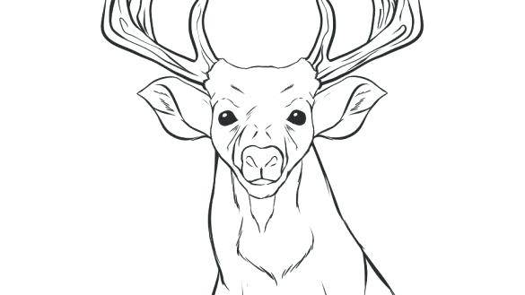 585x329 Deer Head Outline Coloring Page Deer Coloring Pages White Tailed