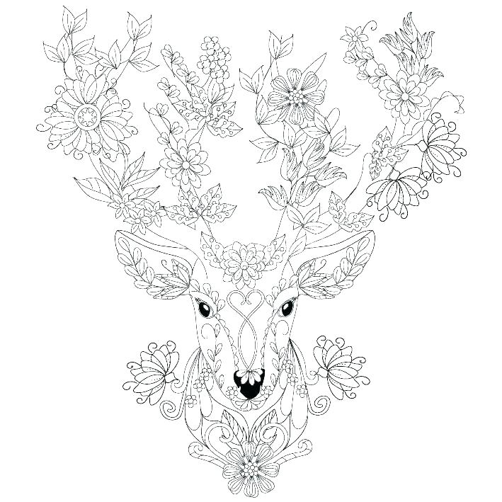 709x709 Deer Hunting Coloring Pages White Tailed Deer Coloring Page Deer