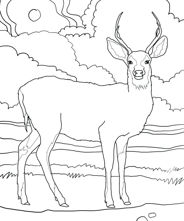 640x768 Deer Pictures To Print Deer Coloring Picture Deer Coloring Pages
