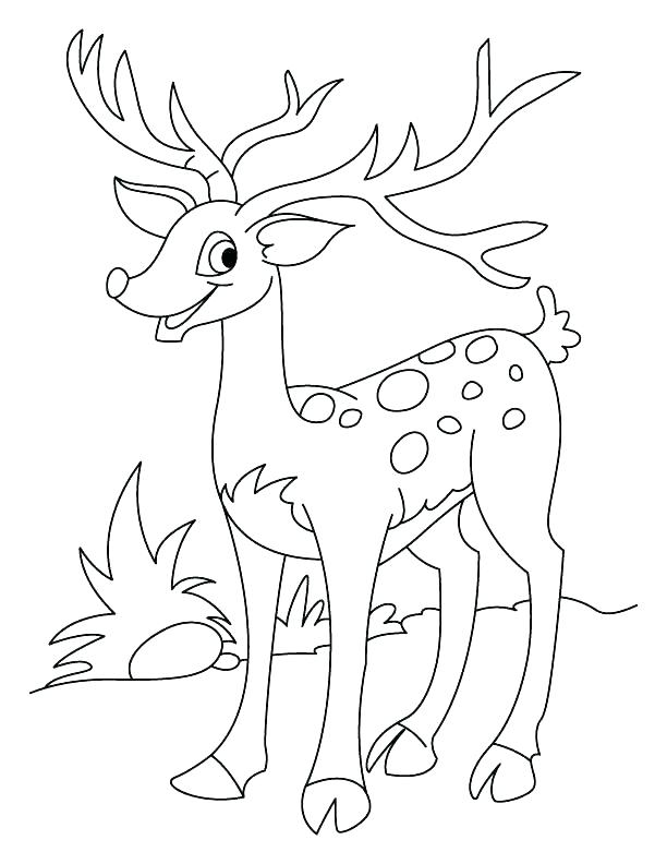 612x792 Baby Deer Coloring Pages John Combine Coloring Pictures Elegant Oh