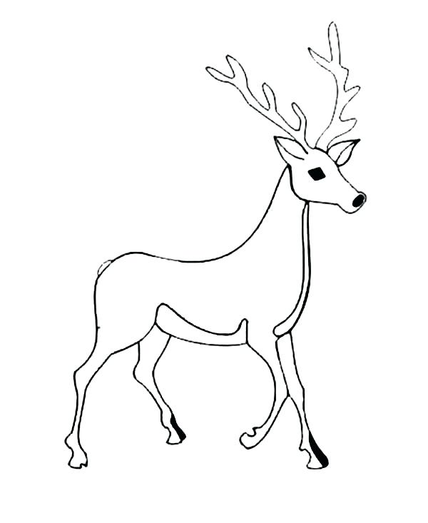 600x733 Whitetail Deer Coloring Pages Male Deer Picture Coloring Page