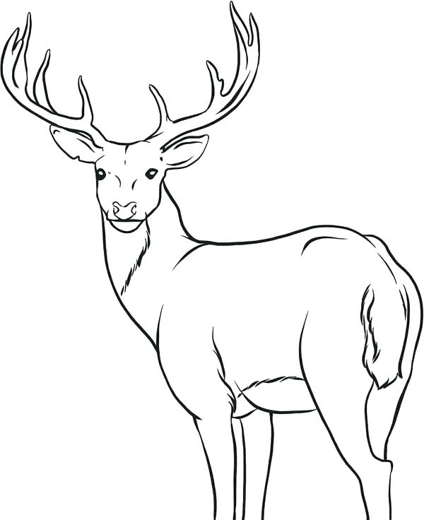 600x736 Wonderful Loon Coloring Page Deer Head Coloring Pages Holiday