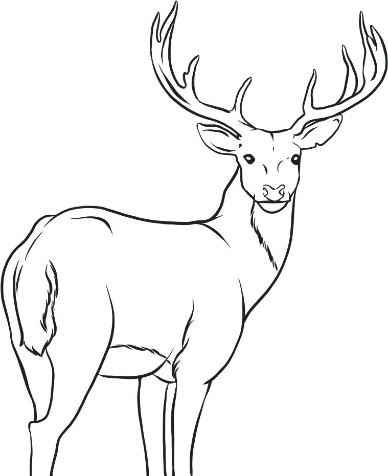 759x931 Astonishing Marvellous Deer Head Coloring Pages Best Of Page Free