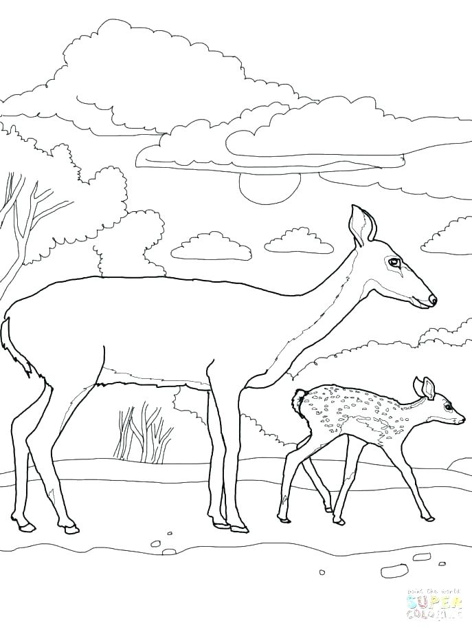 687x916 Coloring Pages Deer Deer Head Coloring Pages Deer Skull Deer Face