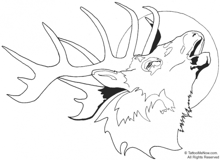870x636 Coloring Pages Deer Head Coloring Pages