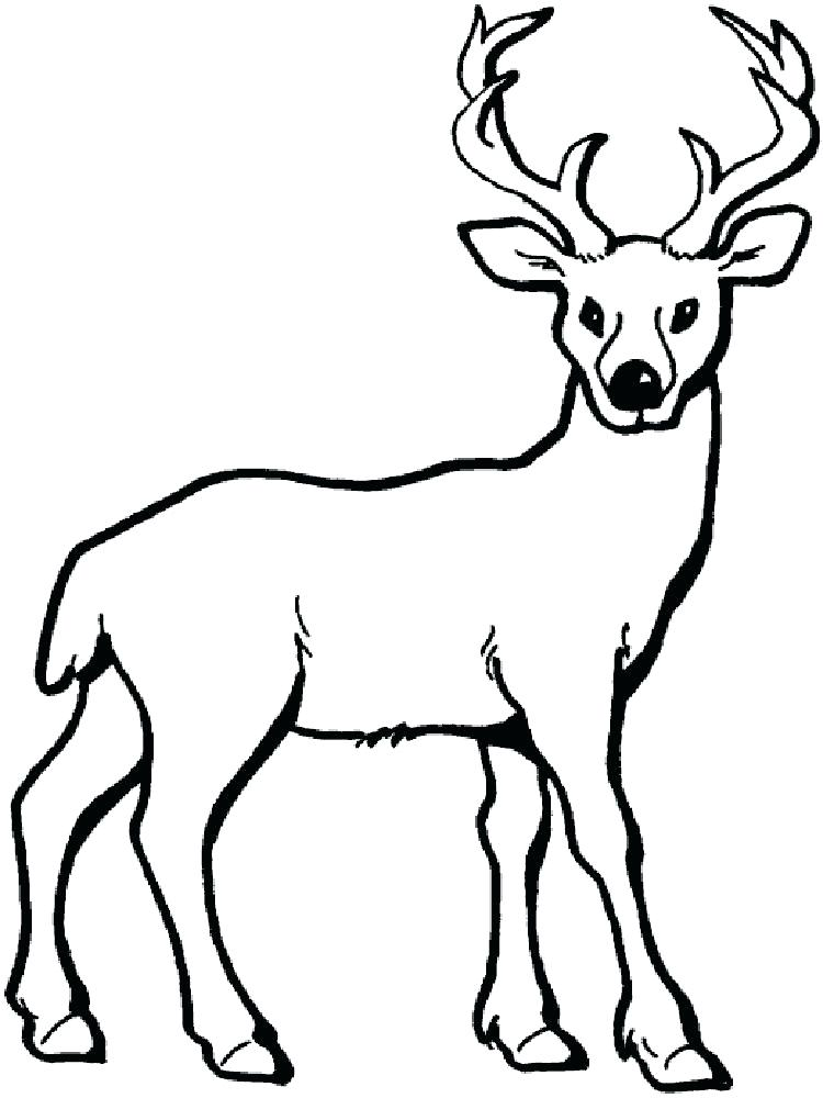 750x1000 Deer Coloring Page Informative Printable Deer Pictures Coloring