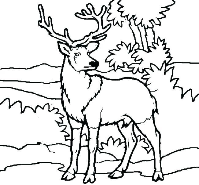 650x604 Deer Hunting Coloring Pages Deer Hunter Coloring Pages Deer
