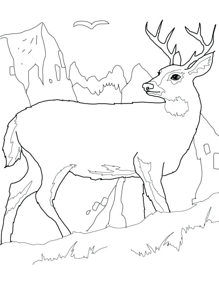 728x971 Free Deer Coloring Pages Adult Coloring Pages Deer Free Free Deer