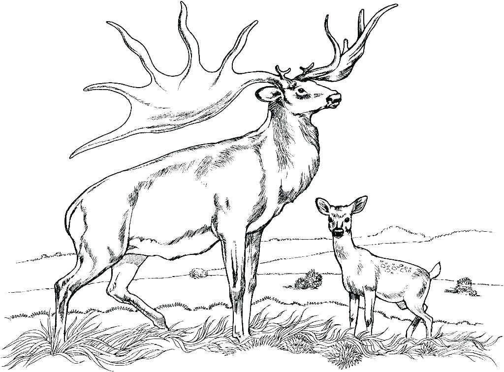 1024x756 Free Deer Coloring Pages Free Deer Coloring Pages Deer Coloring