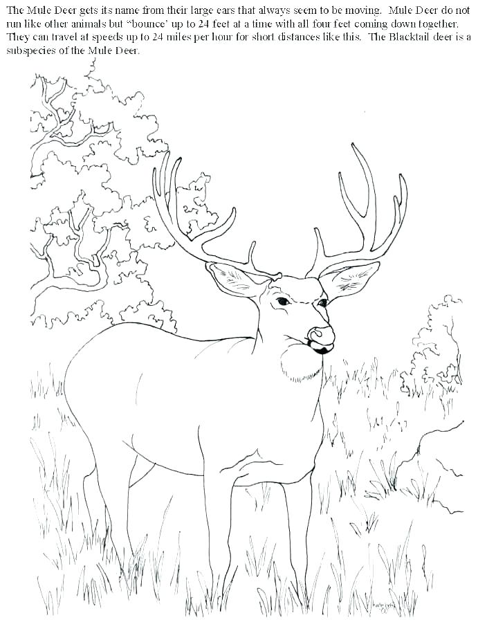 704x899 Whitetail Deer Coloring Pages Coloring Pages Deer Deer Hunter