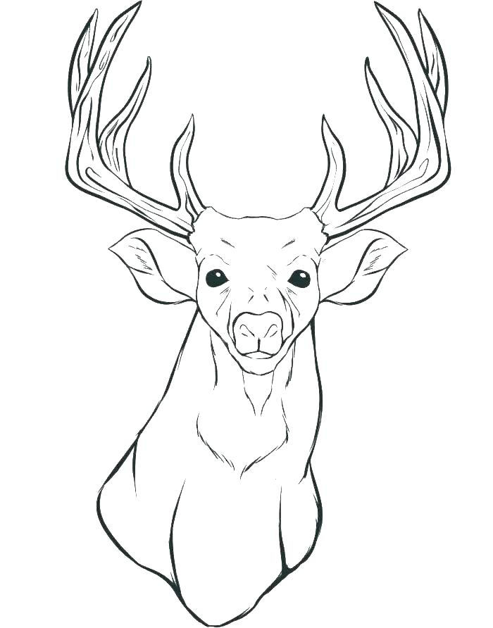 700x892 Deer Hunting Coloring Pages