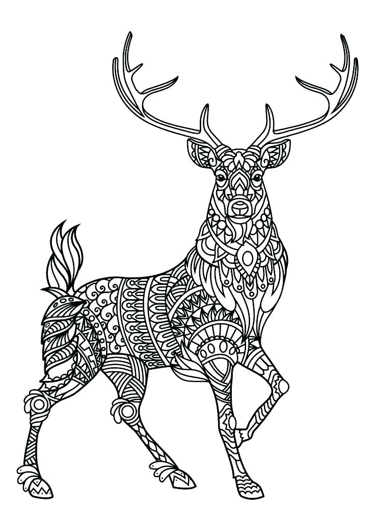 736x1040 Elk Coloring Pages Deer Hunting Coloring Pages Elk Coloring Pages
