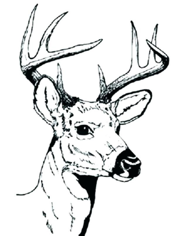 618x805 Coloring Pages Deer Hunting Coloring Pages Deer Hunting Coloring