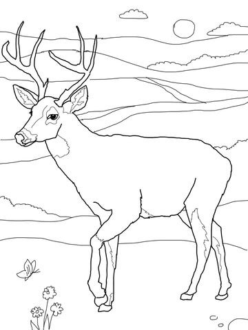 360x480 White Tailed Deer Coloring Page From White Tailed Deers Category
