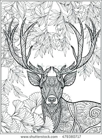 341x470 Deer Color Pages Coloring Pages Of Deer Coloring Page Deer Forest