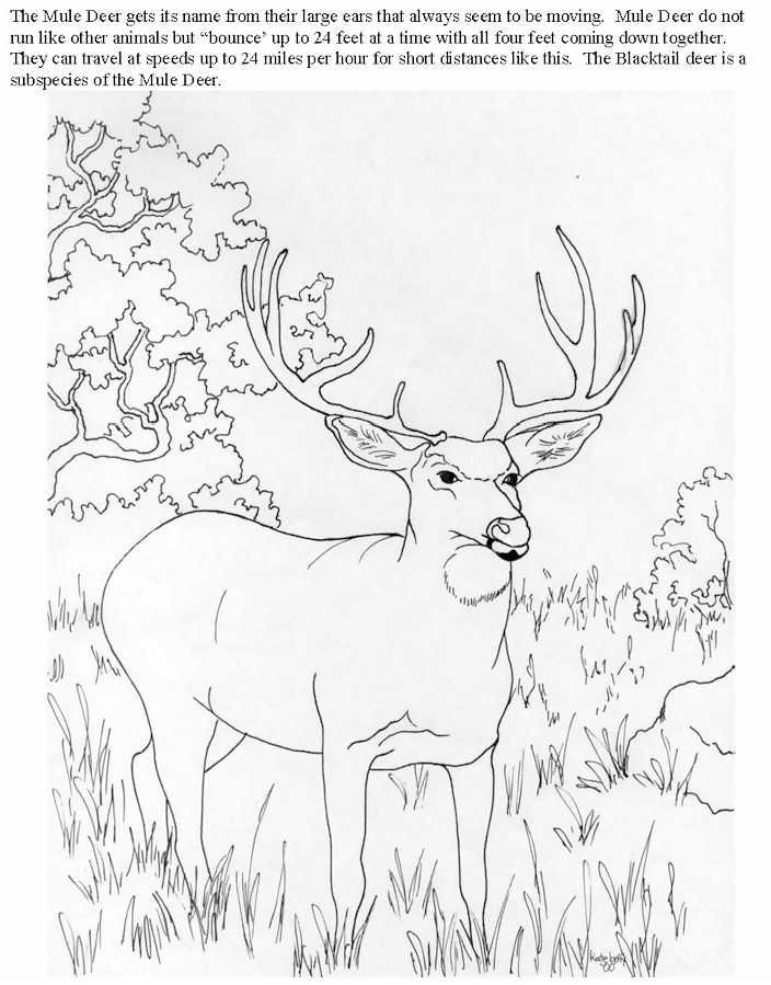 704x899 Deer Hunting Coloring Pages