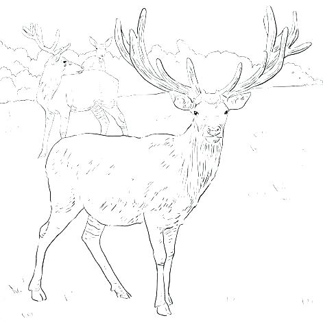 471x480 Deer Hunting Coloring Pages Deer Hunting Coloring Pages Deer