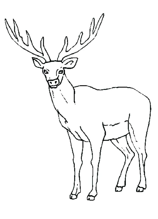 600x831 Elk Coloring Page Elk Coloring Page Elk Female Elk Colouring Page