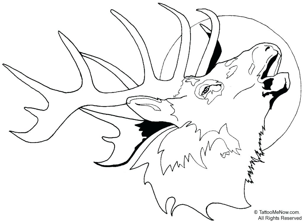 1024x748 White Tailed Deer Coloring Page Kids Coloring Printable Deer