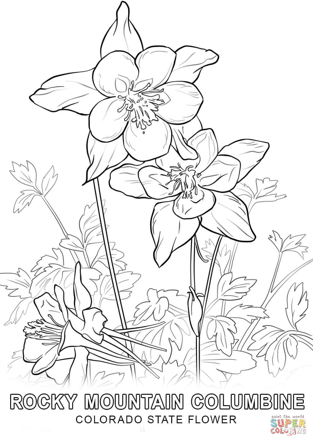 1020x1440 Wanted Delaware State Flower Coloring Page Colorado Free Printable