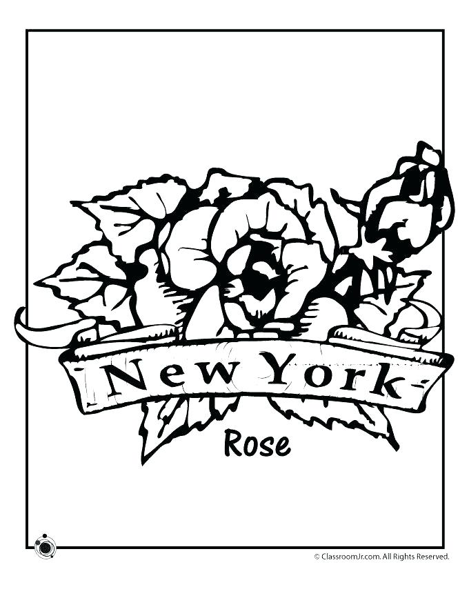 680x880 Delaware State Flower Coloring Page Professional