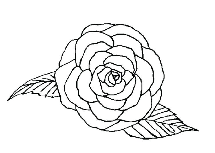 752x536 Rose Coloring Pages Nice Roses Coloring Pages Nice Design Gallery