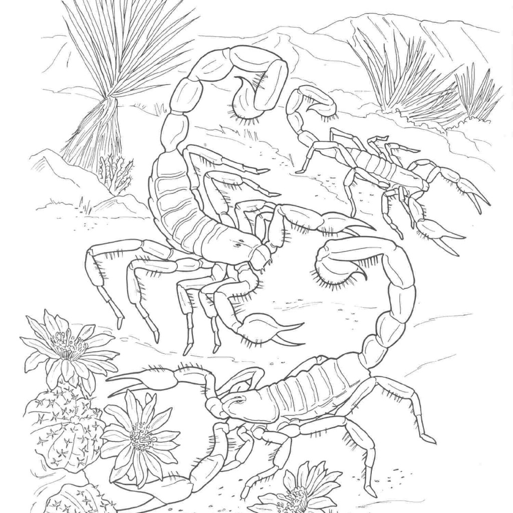 1024x1024 Desert Animals Coloring Pages Desert Animal Coloring Pages