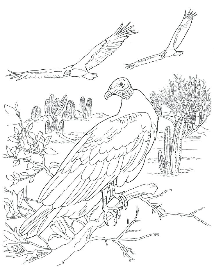 736x927 Desert Animals Coloring Pages Desert Scene Coloring Pages