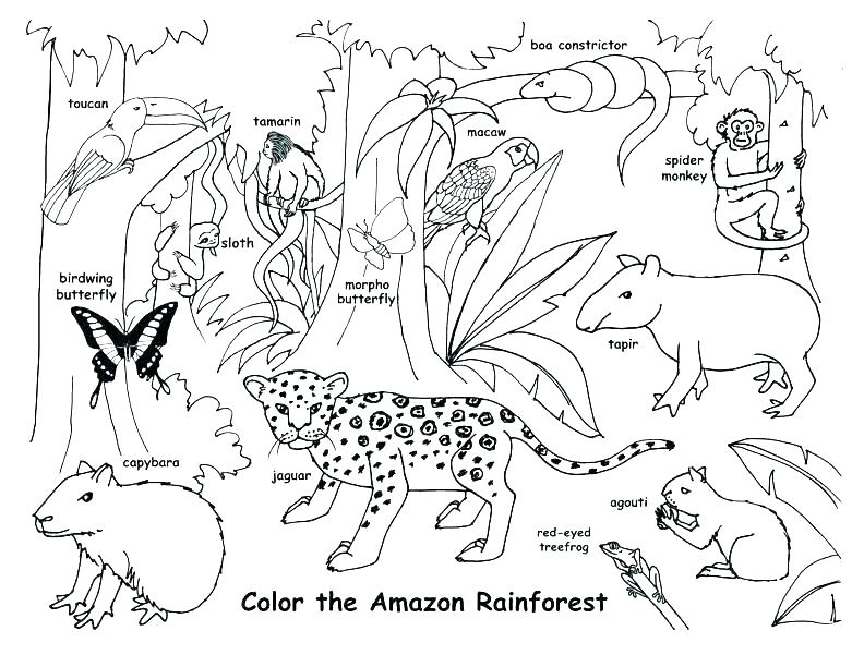 792x612 Desert Animal Coloring Pages