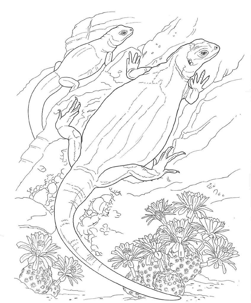 847x1024 Desert Animals Coloring Pages Desert Animals Coloring Pages