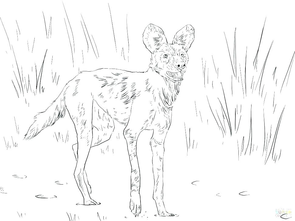 970x728 Desert Animals Coloring Pages