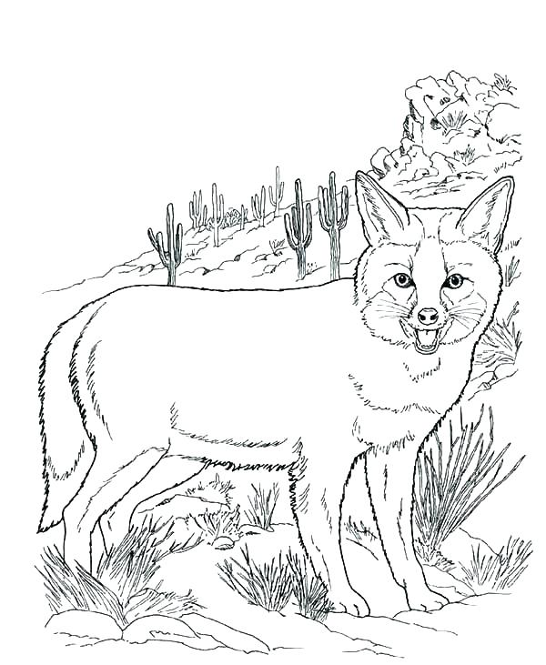 600x731 Desert Animal Coloring Pages Animals Coloring Pages Printable Plus