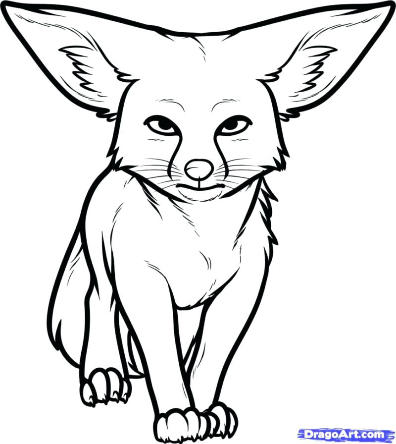 800x896 Desert Animal Coloring Pages Animals Gallery Pictures De Murs