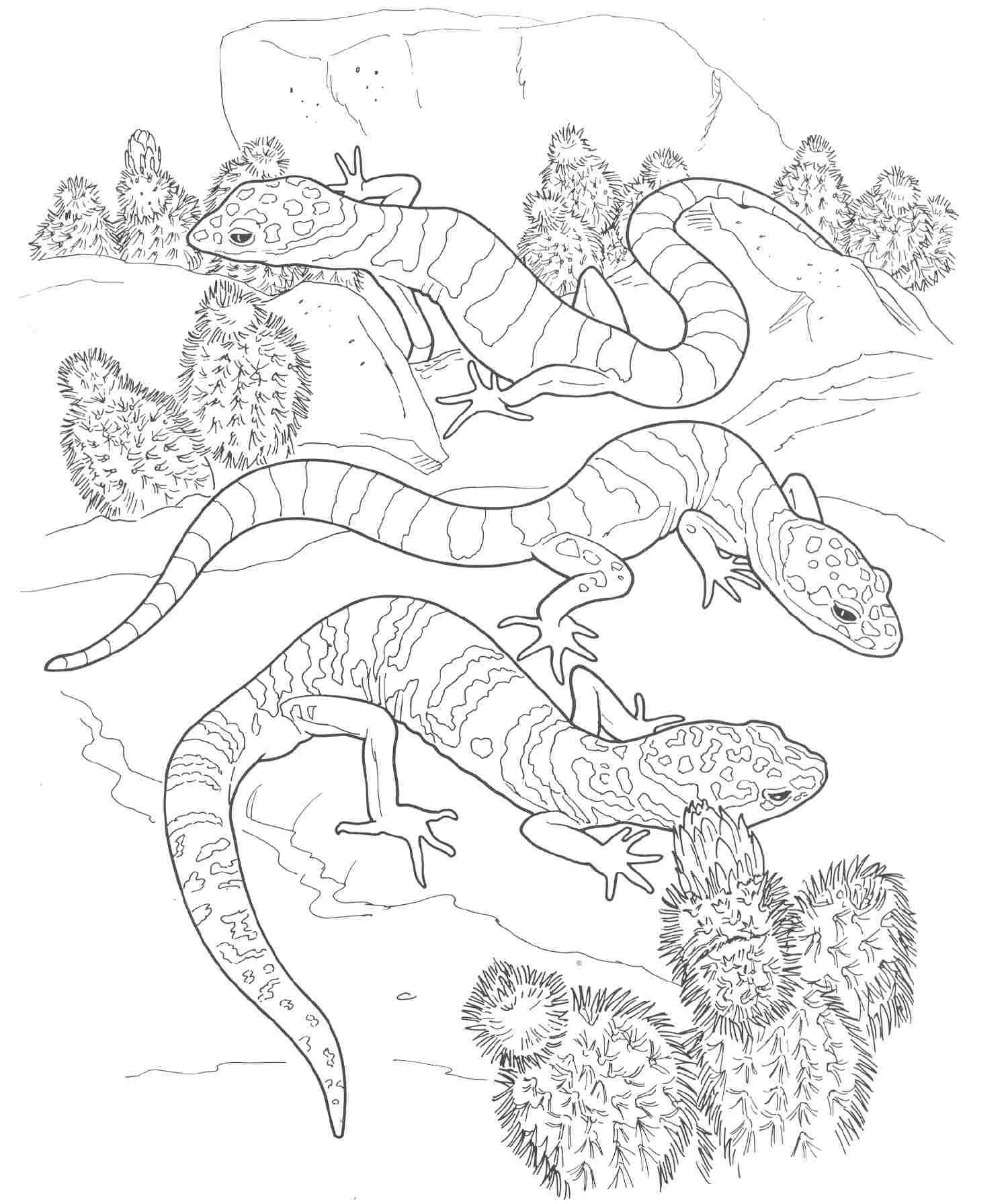 1500x1791 Desert Animals And Plants Coloring Pages Download Coloring