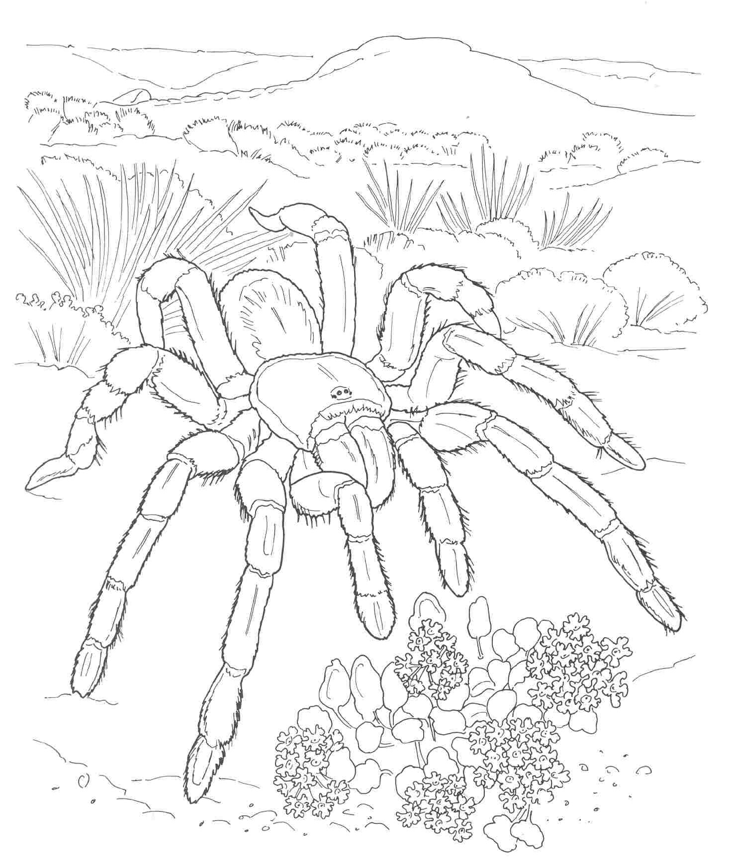 1468x1745 Desert Coloring Pages