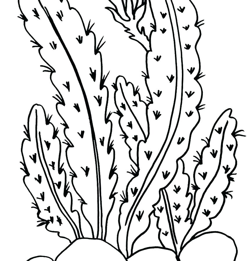 850x900 Flowers Coloring Pages Plants Coloring Pages Coloring Pages Plants